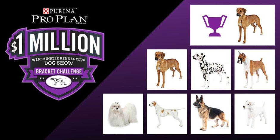 Dog Show Bracket Challenge Contest - Win Cash Prizes