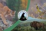 National Wildlife Federation Photo Contest