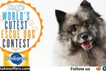Pedigree World's Cutest Rescue Dog Entry
