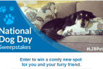 National Dog Day Sweepstakes Chance To Win Comfy New Spot