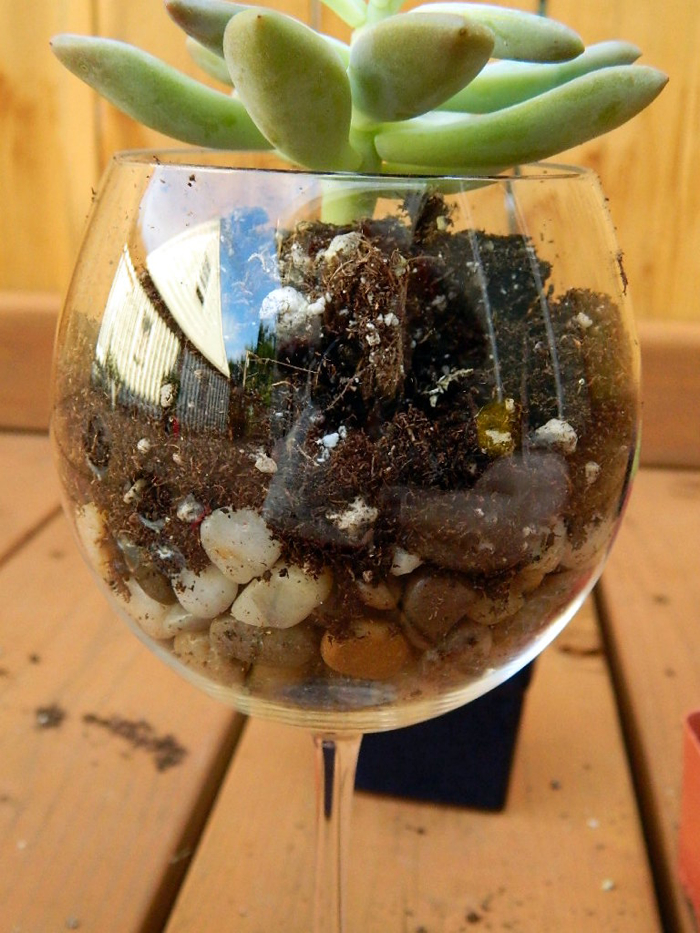 Tattooed Martha - Wine Glass Terrariums (4)