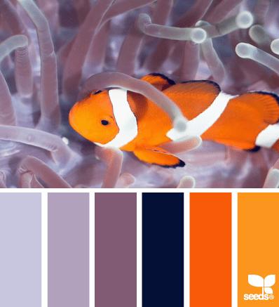 ColorSwim_3