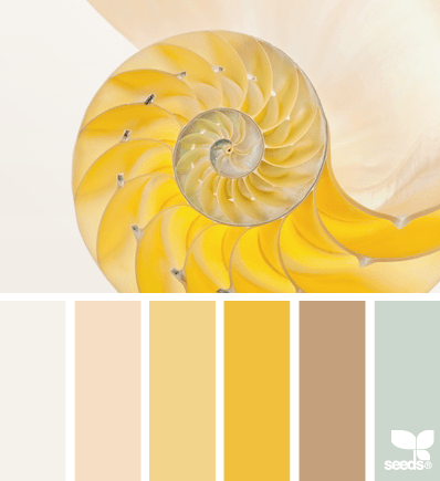 NautilusYellows