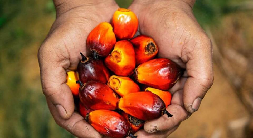 history of palm oil