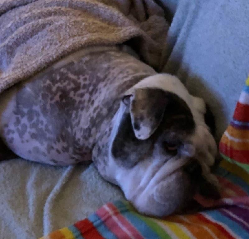endocrine disease in dogs