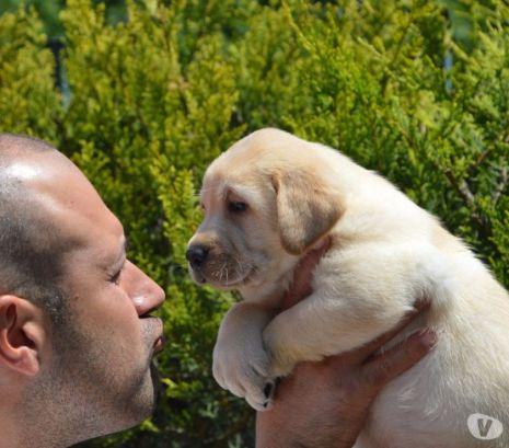 https://www.sweetdreamlabrador.it/cucciolate-prenota-il-tuo-dolcissimo-cucciolo/