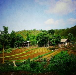 Farm near Luang Prabang