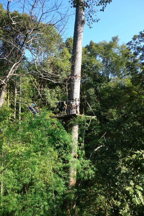 Ziplining in the jungle, Mae Rim