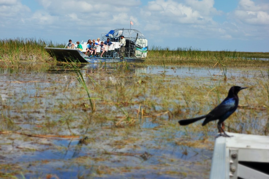 Everglads airboat tour