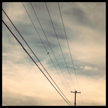 Bird on a telephone wire.