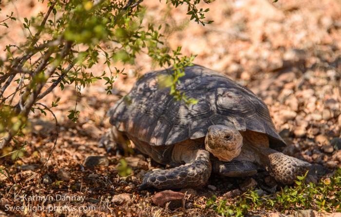 tortoise-final