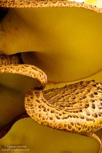 Mushroom Twist