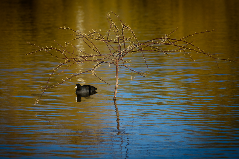 Duck and Tree