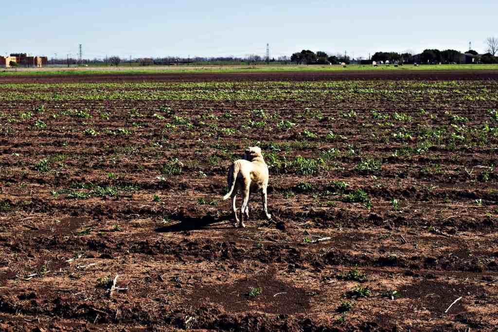 loam agronomics | via sweet miscellany