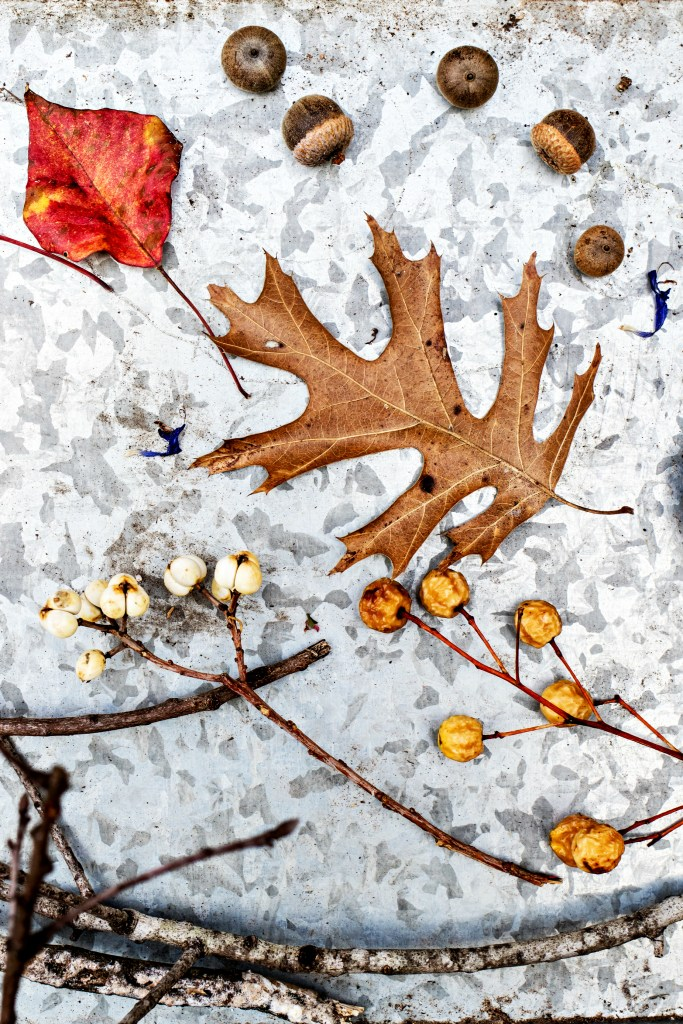 autumn ritual: gathering bits of nature | via sweet miscellany