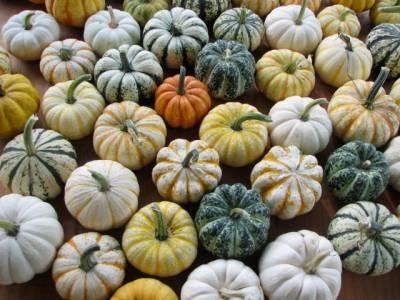 How to Choose the Best Pumpkin - Miniature