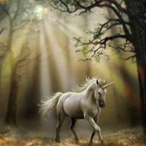 Wizards Key Book One of The Darkwolf Saga Unicorns Do Exist