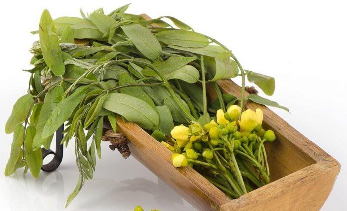 Teas For Digestion - Ease Your Stomach With These Teas - Senna Tea