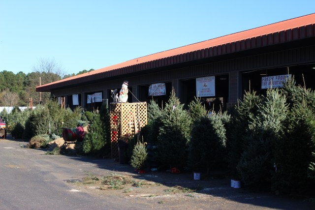 Christmas Trees in Every Size