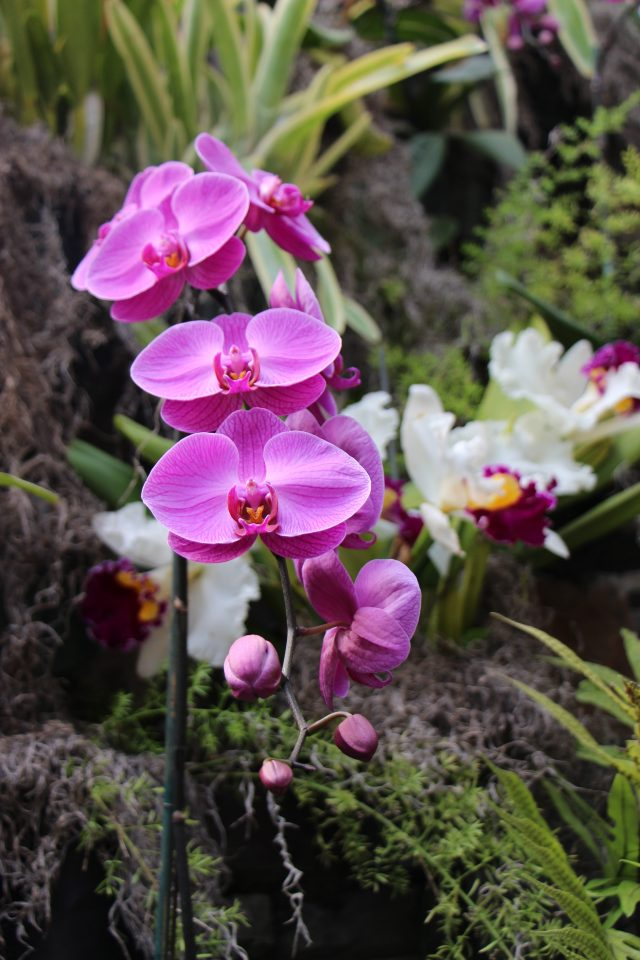Yet More Orchids