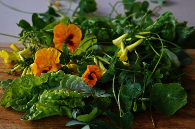 Forager's Salad Idiot Salad