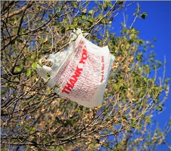 02 (OPINION) - Teds 8-23 Plastic bags