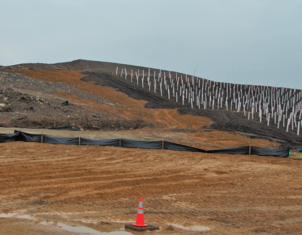 The partially planted area on the former Clearview landfill. 5,000 trees are already planted in their white protective sheaths.