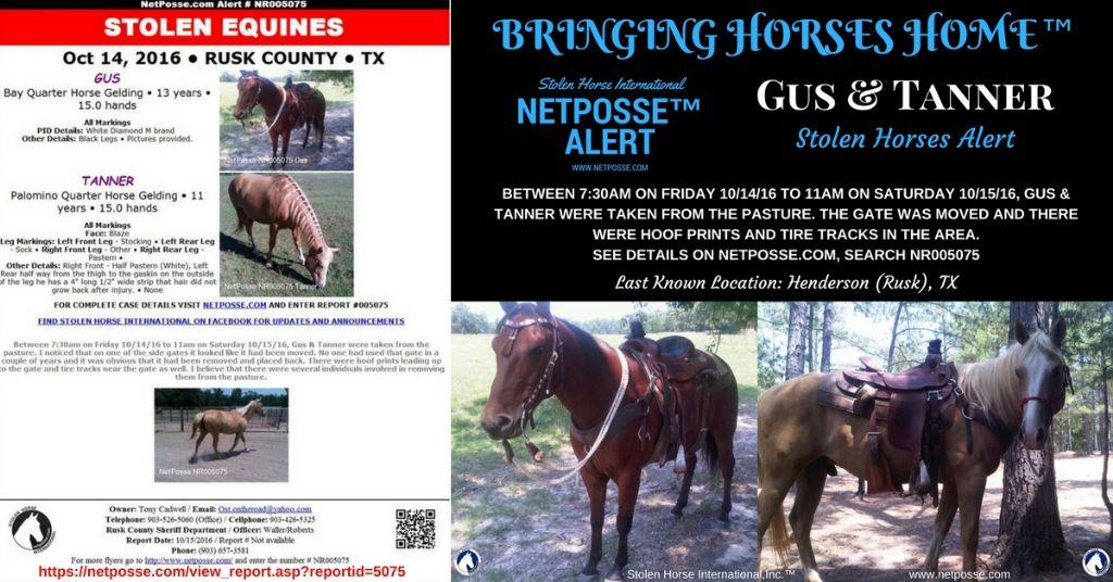 "STOLEN EQUINES – Grand Press Augustus aka ""Gus"" & Tanner– Texas"