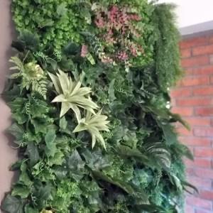 Zielona ściana Monstera
