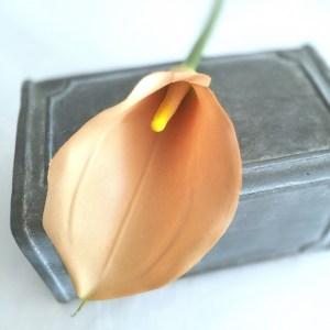 Gumowa Kalia Cappuccino