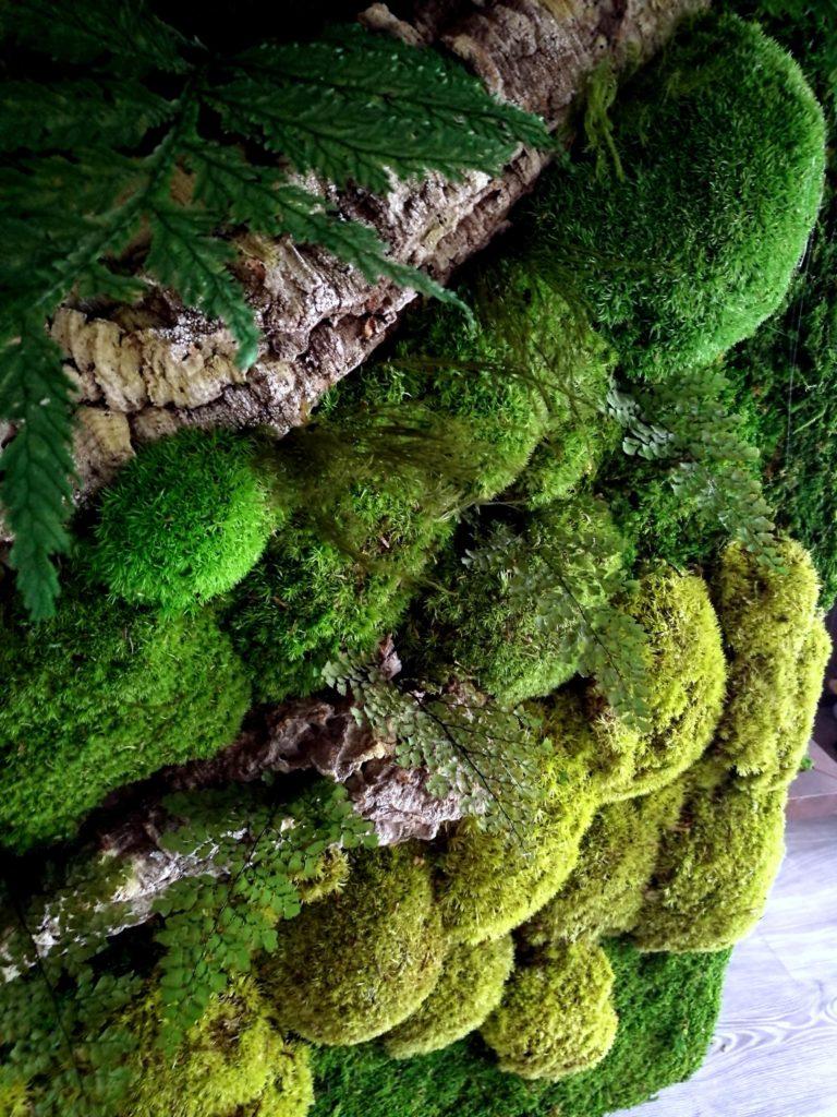 Obraz z mchu stabilizowanego Poszycie leśne 50x30 cm