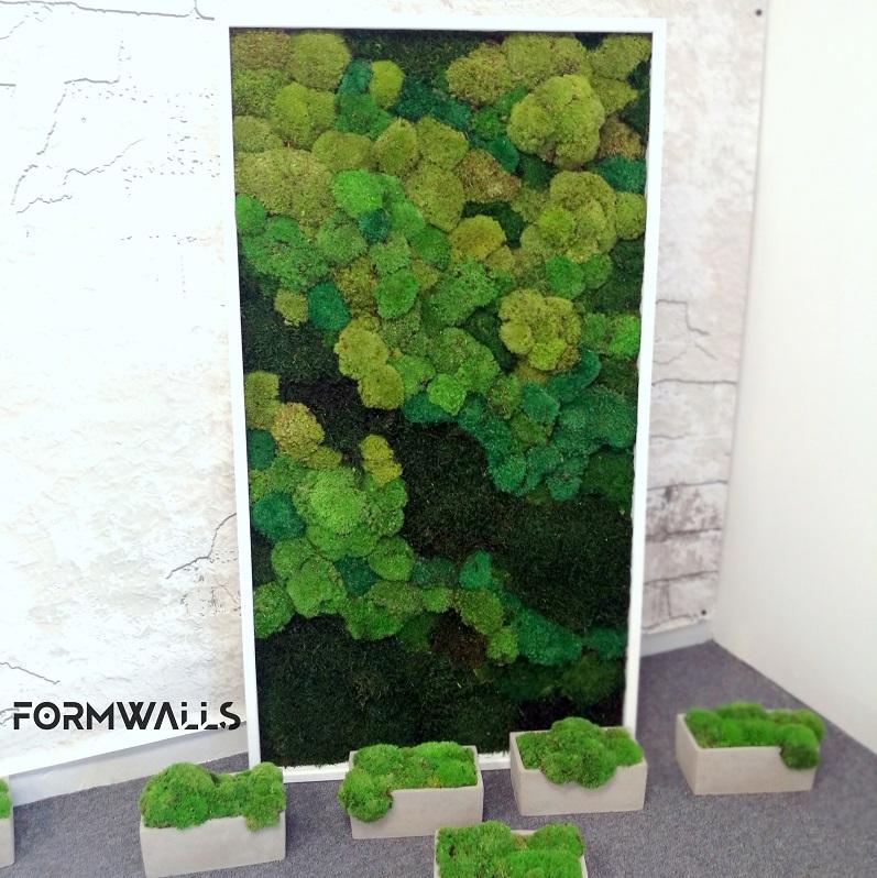 Zielony obraz z mchów stabilizowanych