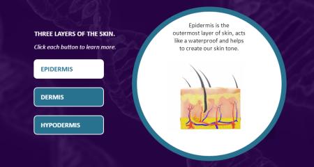 Human Anatomy Skin 3
