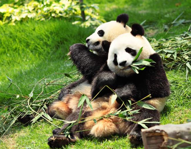 best places to visit in china chengdu