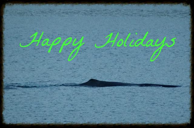 happy-holidays-2013