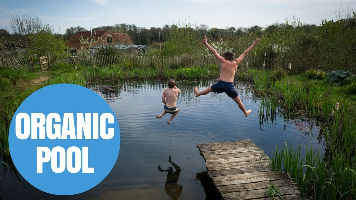 man's diy natural swimming pool makes waves across the globe