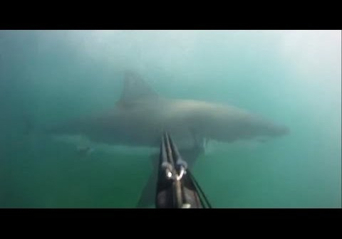 Great White Shark Attack Caught On GoPro