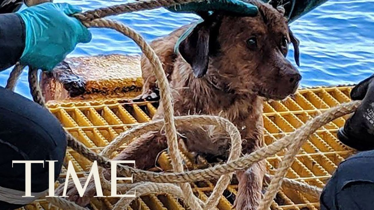 Meet the Luckiest Dog in the World, Rescued While Swimming 135 Miles From Shore