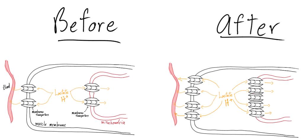 gmx7-how-it-works-photo 6