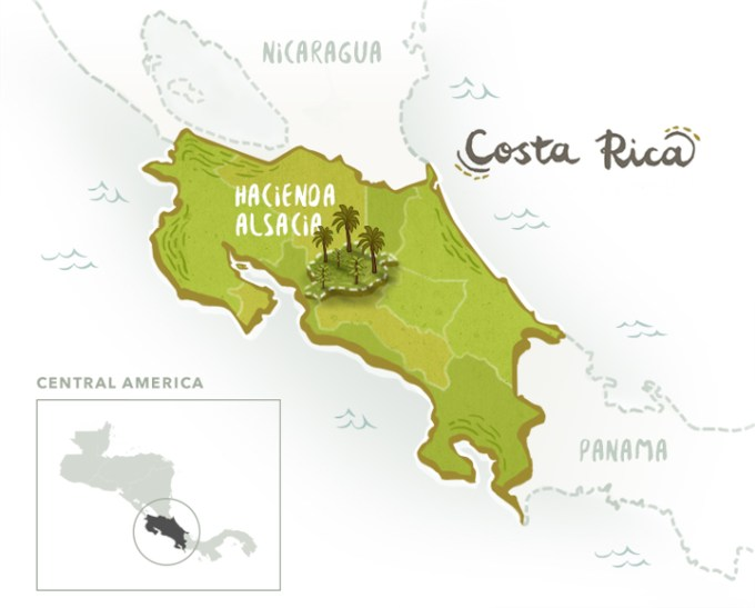 Hacienda Alsacia is harvested from the first-ever Starbucks farm in South America, acquired by Starbucks in 2013 as an investment to the coffee industry's sustainability. In this 240-hectare lot, agronomy experts work alongside farmers to develop coffee varieties, improve yields, and overcome diseases in crops.
