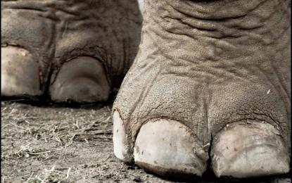 1561539536elephant feet