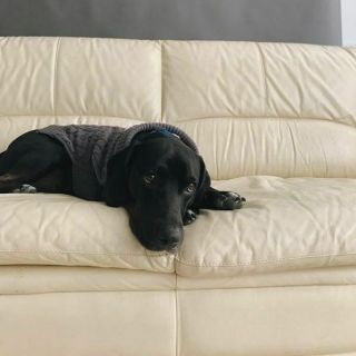 On Office Pets During Office Hours: Balancing Work and Wags