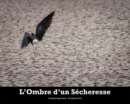 Des sélections du reportage photo L'Ombre d'une Sécheresse seront exposées au Migratory Bird Festival.