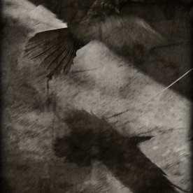 Raven Bait