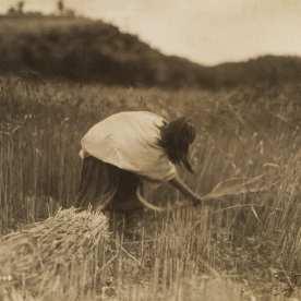 "Edward S. Curtis, Apache Reaper, 1906, platinum, 6 x 8"""