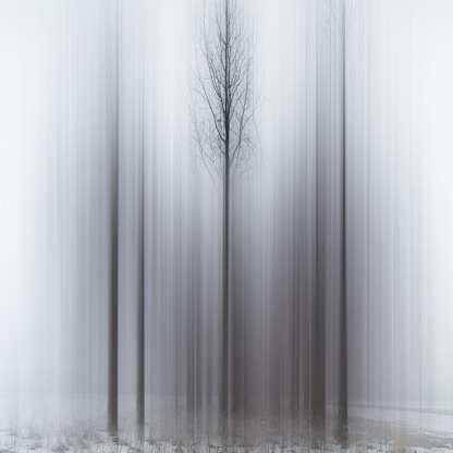 Promises of Spring ©Ellen Jantzen