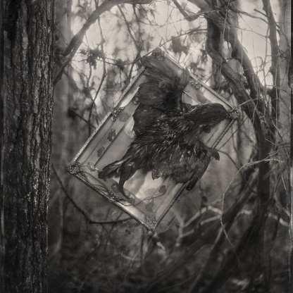 Phoenix ©Nicole LeCorgne