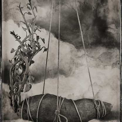 Sweet Potato ©Nicole LeCorgne