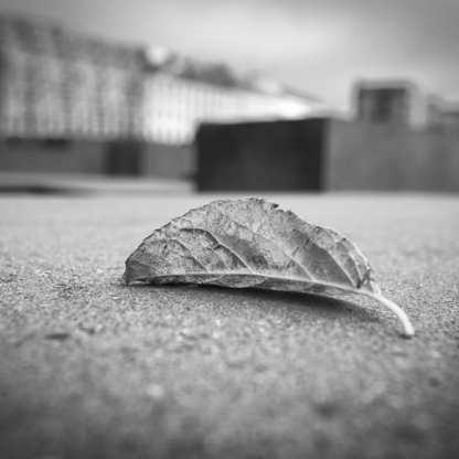 Fallen ©Carolyn Meltzer