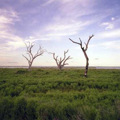 Salt Marsh Trees ©Jill Moore